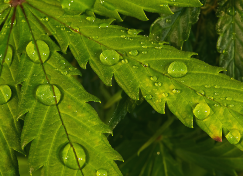 Top 10 Water Parameters to Measure for Quality Cannabis Growth